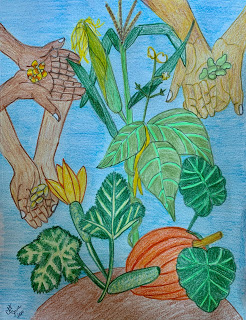 drawing in colored pencils of a 3 sisters garden